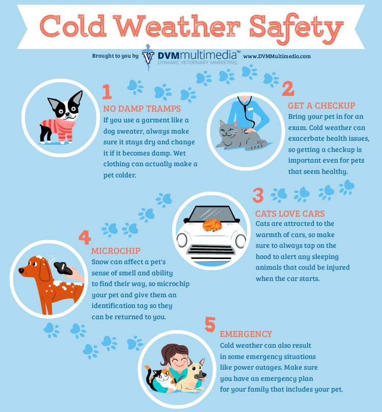 Winter Pet Safety Imperial Animal Hospital